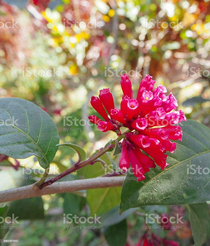 The Red Flower. Стоковые фото Стоковая фотография