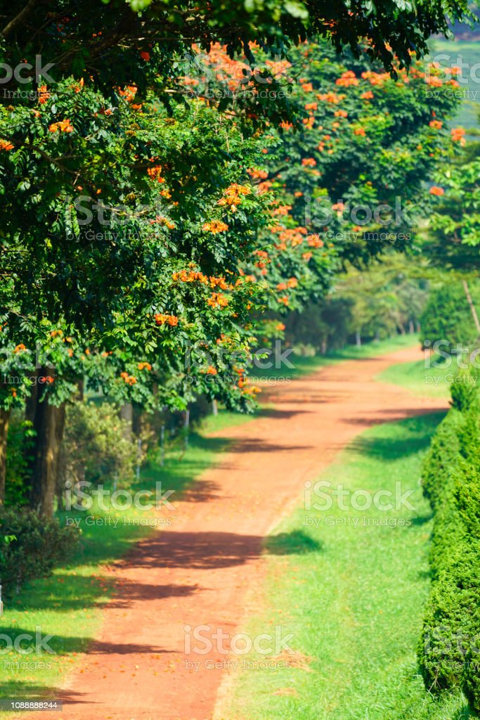 The red pathway in Bao Loc city, Lam Dong province, Vietnam. stock photo