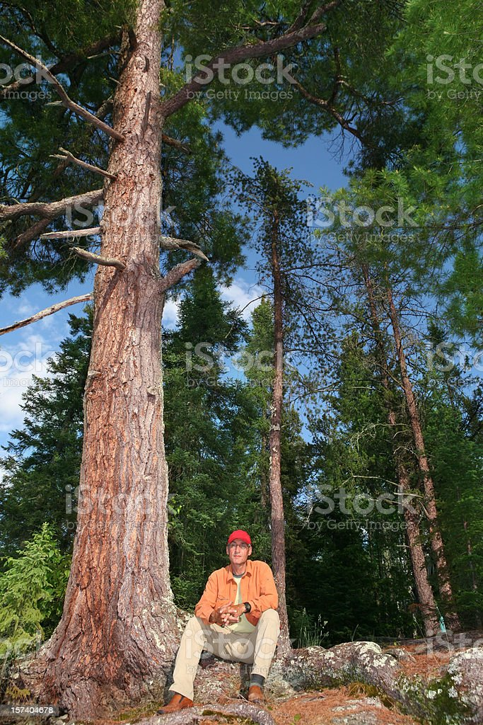The Red Pines of Crooked Lake stock photo