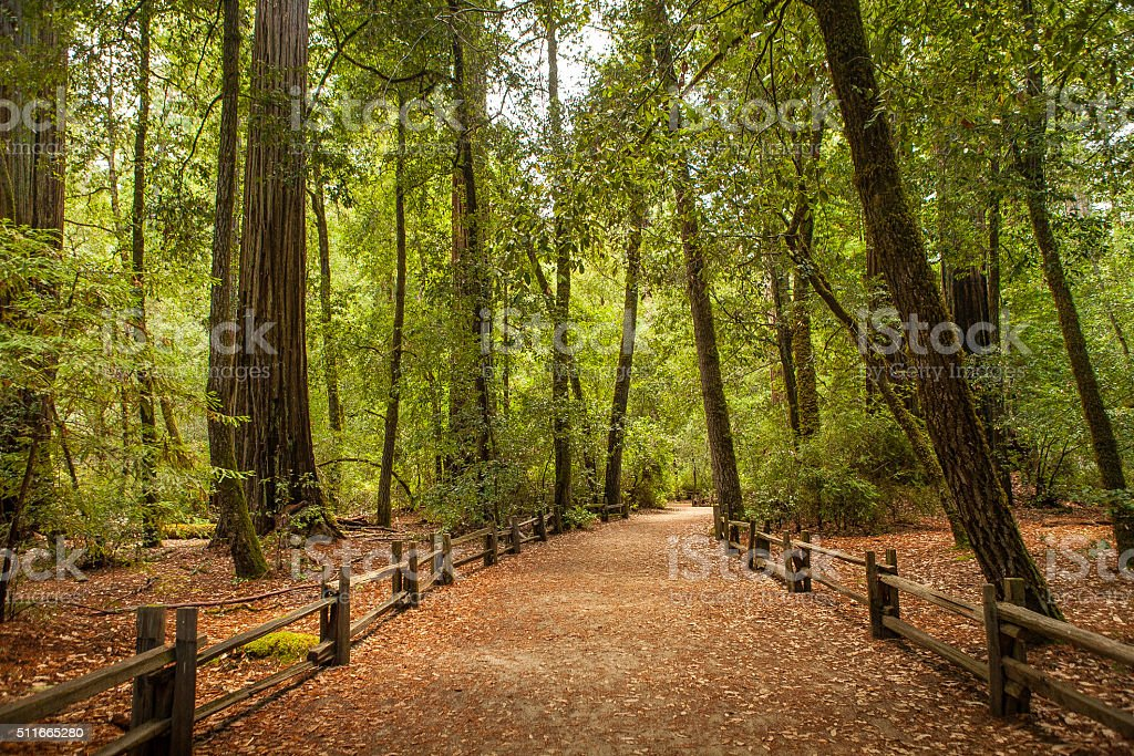 The Redwood Nature Trail, Big Basin State Park stock photo