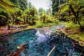 The Redwoods Whakarewarewa Reflection Pool Forest Rotorua New taken in 2015