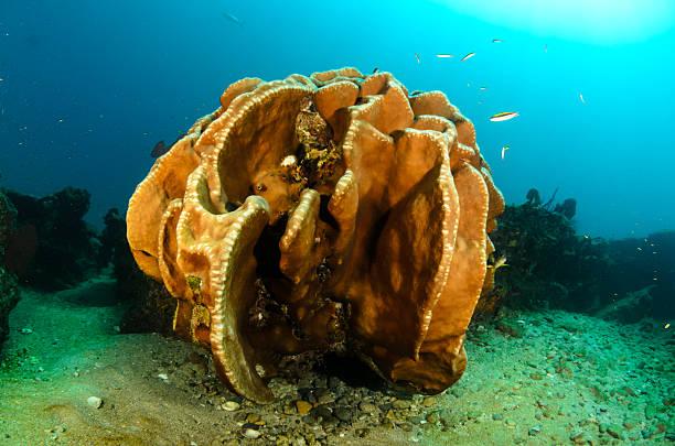 le scogliere sul mare di cortez - immerse in the stars foto e immagini stock
