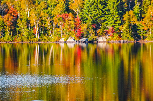 The reflection of the trees in the water. stock photo