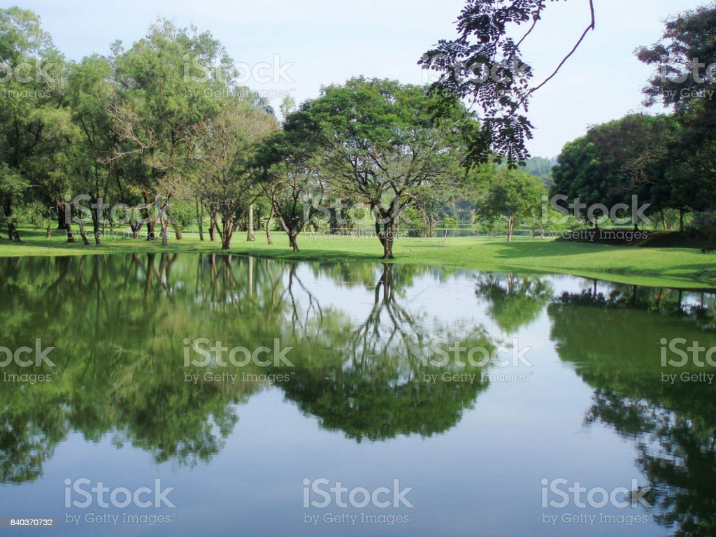 The reflection stock photo