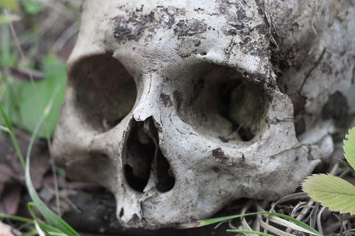 The remains of medieval warrior on the battlefield in the autumn. Real human skull on a nature grass field. Gothic background.