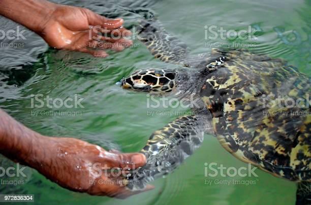 The rescued tortoise holds its flippers with human hands sea turtles picture id972836304?b=1&k=6&m=972836304&s=612x612&h=ax8n58npbaghpfyth  1bkrxawst5wwwjbwsa5krt9q=