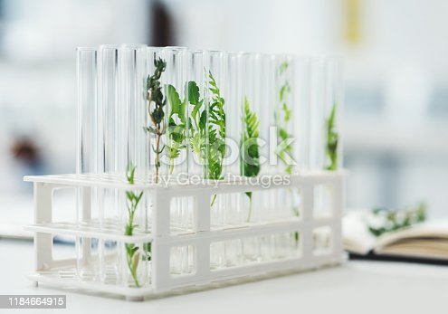 Still life shot of test tubes containing different plant species in a laboratory