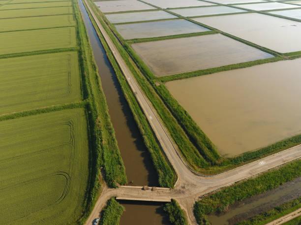 田んぼは水があふれています。湛水の田んぼ。フィールドで稲作の農業方法は。 - クラスノダール市 ストックフォトと画像