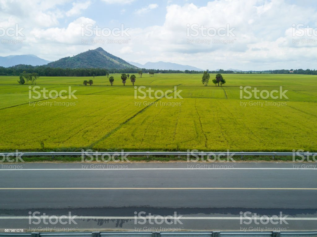 The rice road, paddy field. stock photo