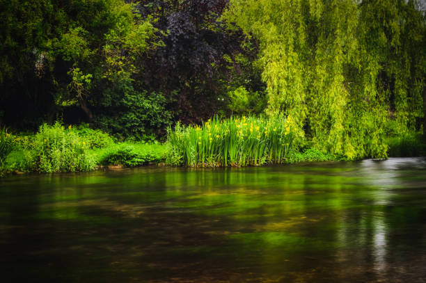 The river bank at Ashford-in-the-water in the Peak District National park. A long exposure of lush green plants and trees growing along the river bank at Ashford-in-the-water in the Peak District National park. riverbank stock pictures, royalty-free photos & images