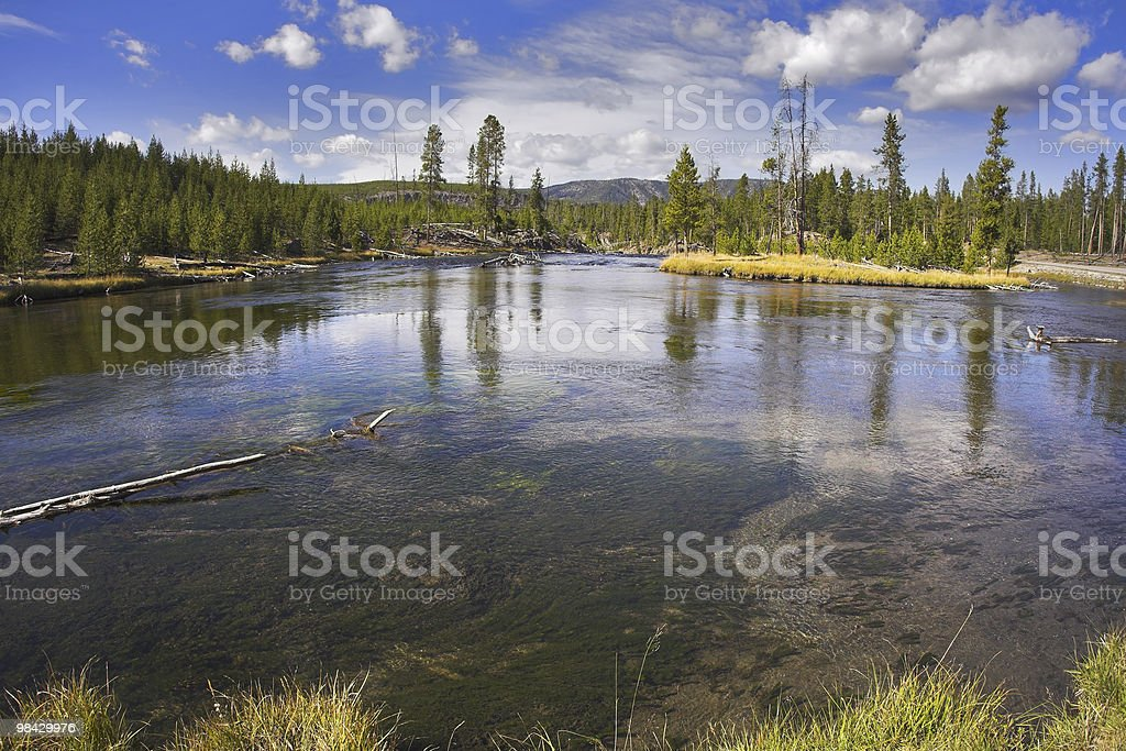 The river Gibbons royalty-free stock photo