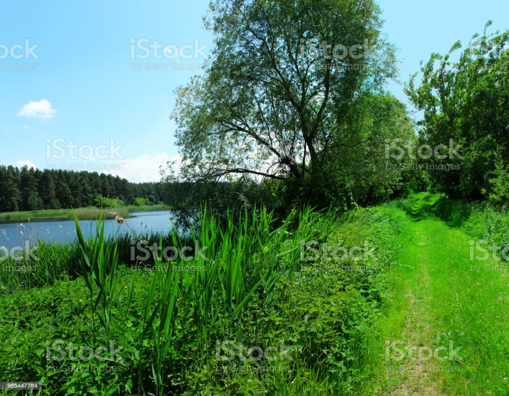 The river in the summer. Beautiful scenery. zbiór zdjęć royalty-free