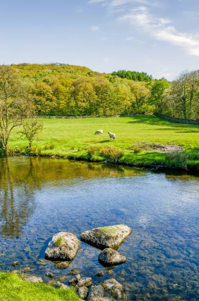 The river Kent near Staveley, Cumbria with rocks in the foreground and woodland in the distance – Foto