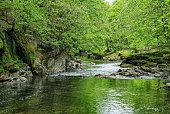 The River Kent passing through woodland south of Kendal, Cumbria, Northern England