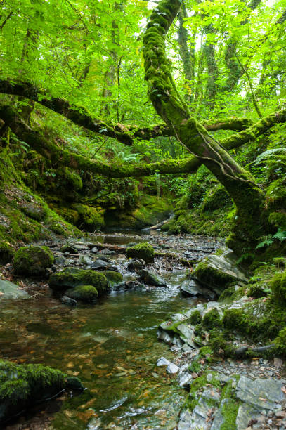 The river Lyd in the Lydford Gorge Natural Reserve, Devon, UK stock photo