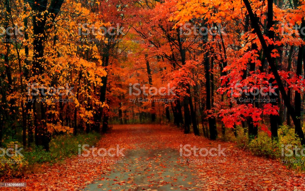 The road covered with autumn leaves autumn Backgrounds Stock Photo