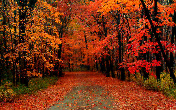 the road covered with autumn leaves - passagem de ano imagens e fotografias de stock