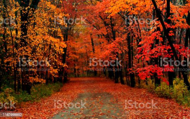 Photo of The road covered with autumn leaves