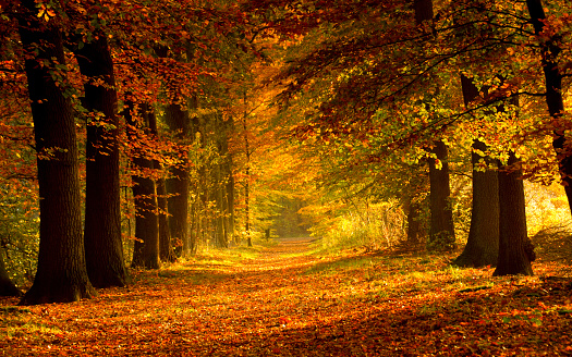 The road covered with leaves in the woods