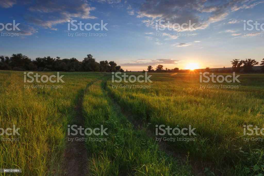 The road in field. Green grass. Sunset light. The sun goes beyond the horizon. Blue sky and clouds. In the background trees. Landscape in the countryside royalty-free stock photo