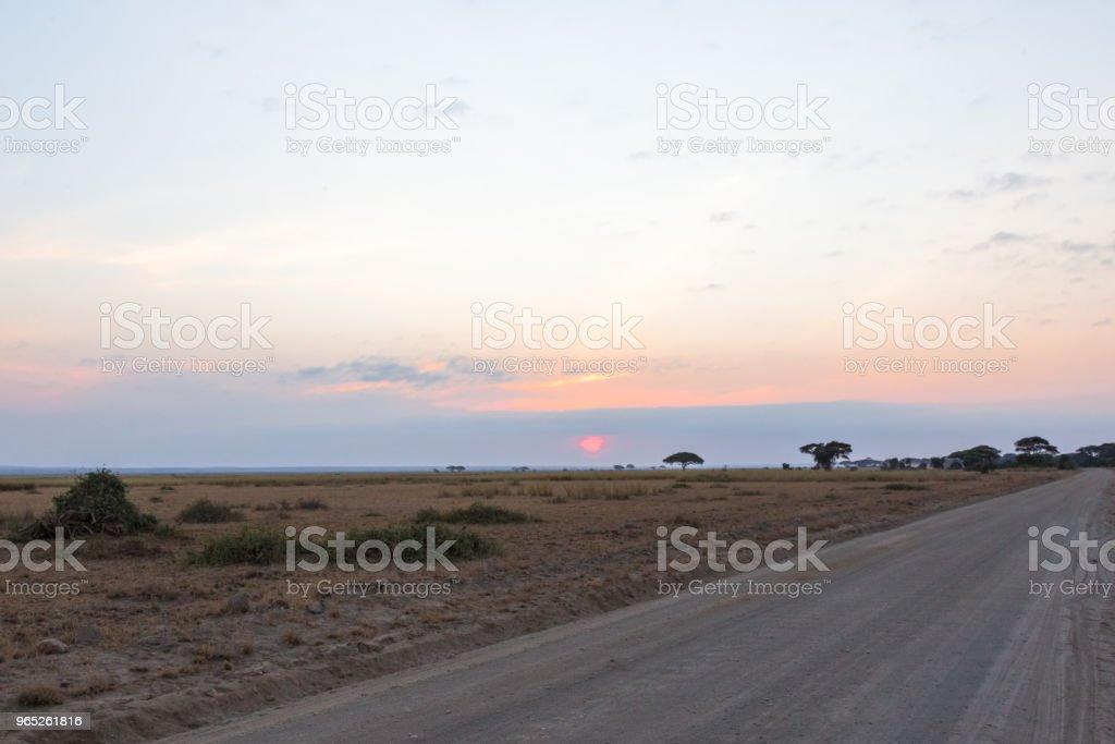 The road in the evening savannah. Kenya, Africa zbiór zdjęć royalty-free