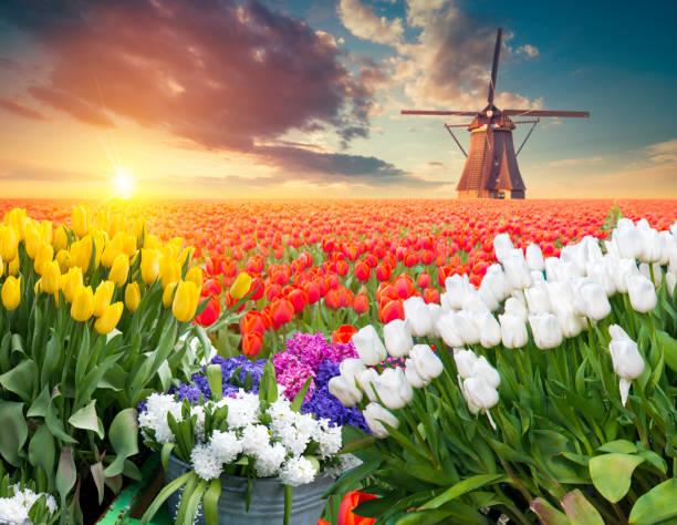 Die Straße führt zu den holländischen Windmühlen aus dem Kanal in Rotterdam. Holland. Niederlande – Foto