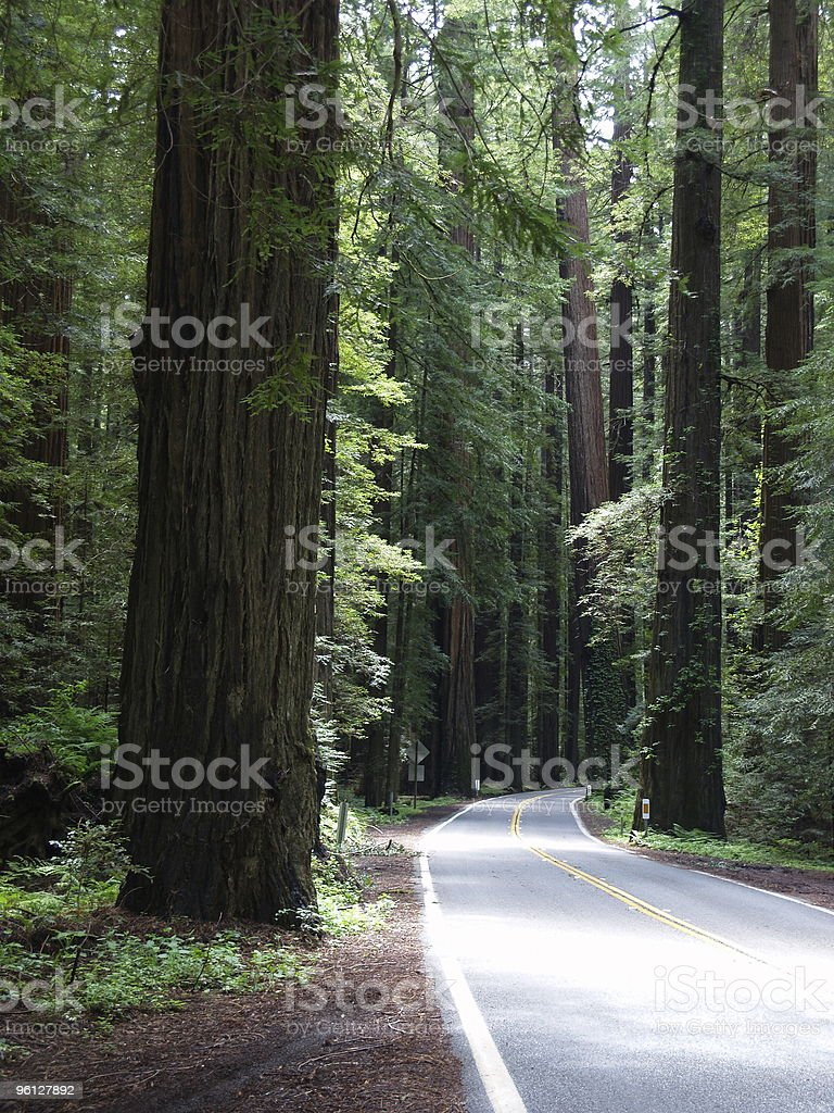 The Road Less Taken royalty-free stock photo