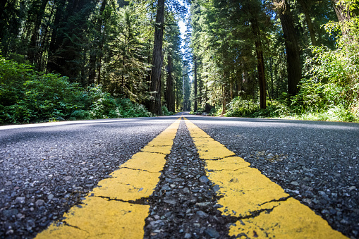 The road through Newton B Drury scenic parkway in Redwood State and National Park is lined with giant Redwood Trees