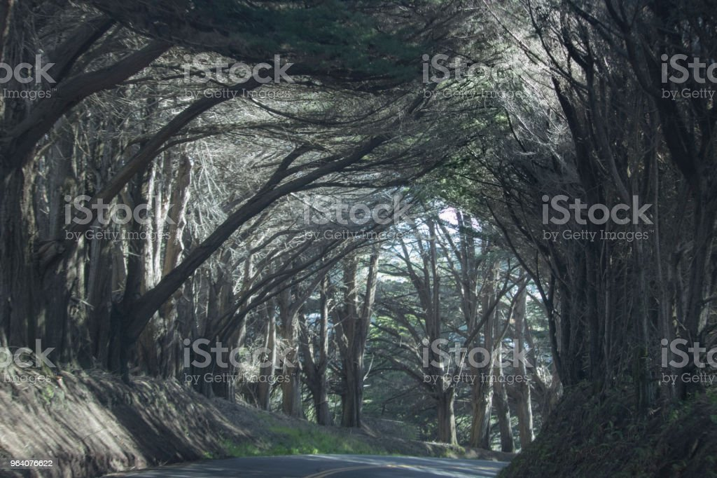 The Road Through - Royalty-free Branch - Plant Part Stock Photo
