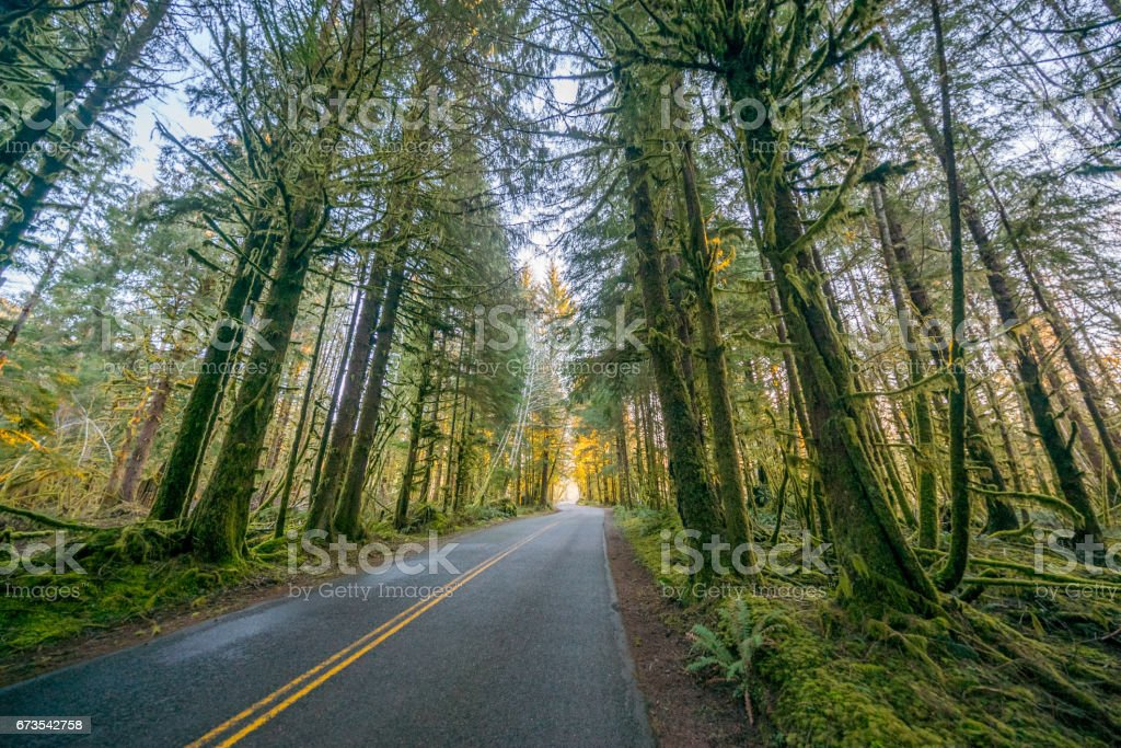 The road through rainforest with lots of trees covered with moss. royalty-free stock photo