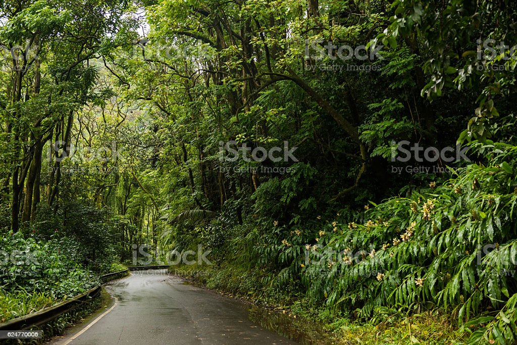 The road to Hana on Maui, Hawaii stock photo