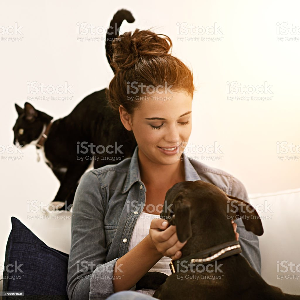 The road to my heart is paved with paw prints stock photo