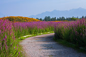 The road to sage flower sea