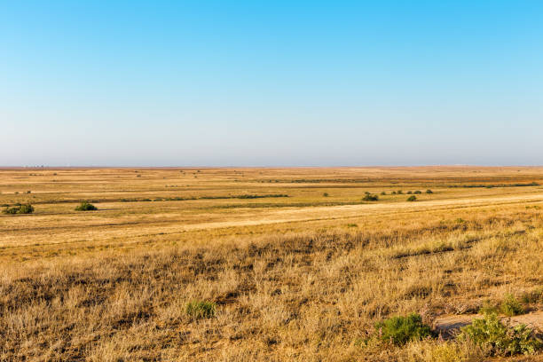 The road to the endless steppe. Scorched savannah stock photo