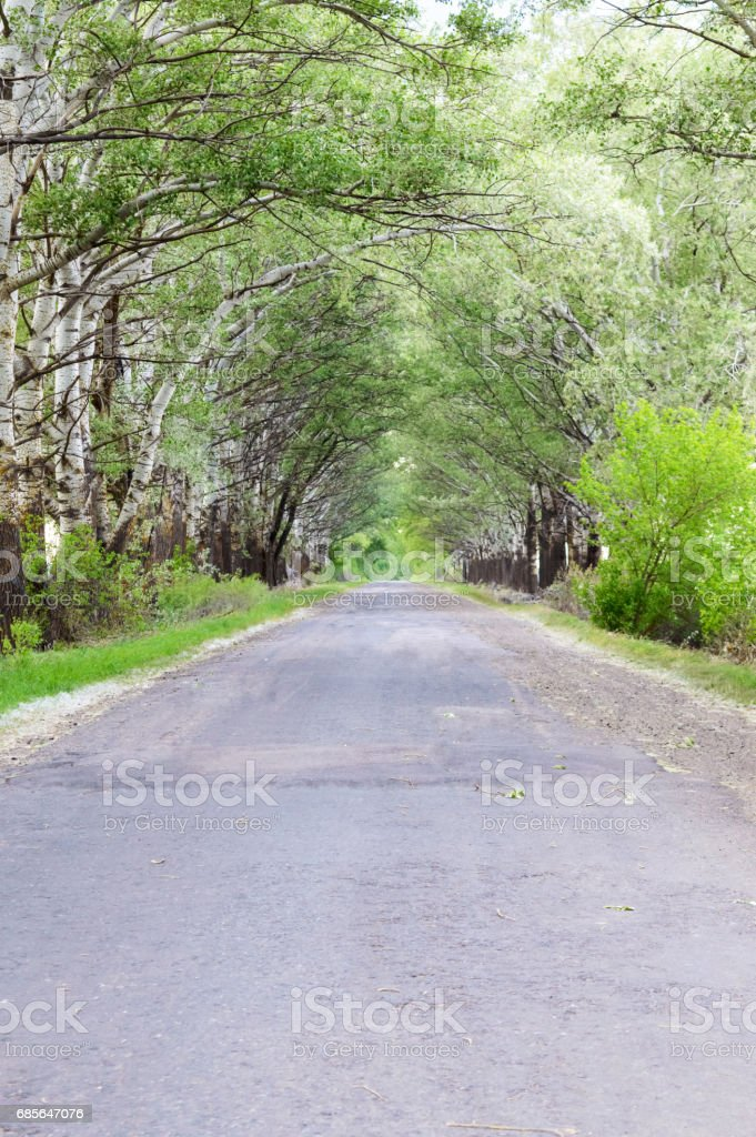 The road with the old asphalt surface, goes into the distance. On the sides are tall green trees that form an arch. 免版稅 stock photo