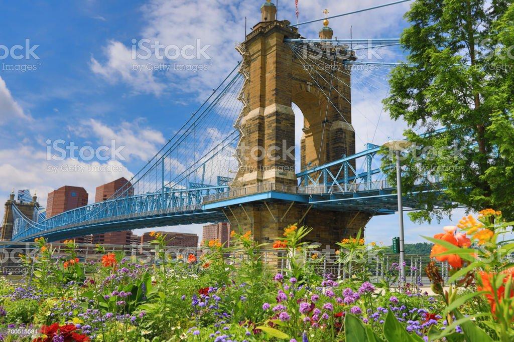 The Roebling Bridge in Cincinnati in the summer stock photo