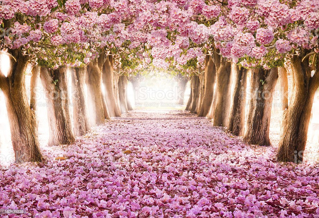 The romantic floqwee tunnel stock photo