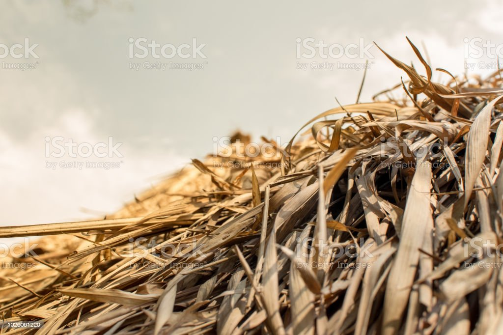 The roof is made of grass, roof and sky. stock photo