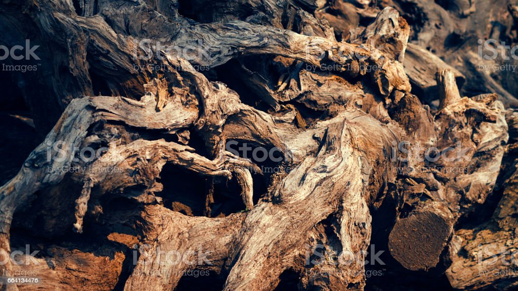 The root foto stock royalty-free