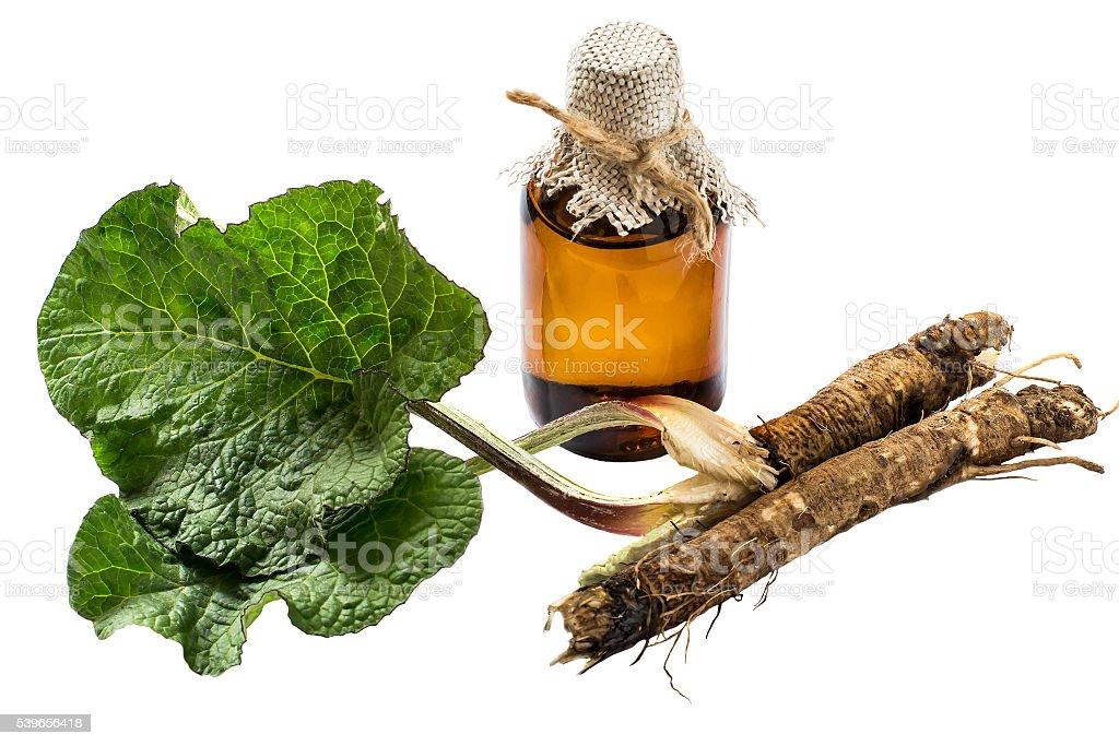 Le radici e foglie di bardana, bardana in bottiglia olio - foto stock
