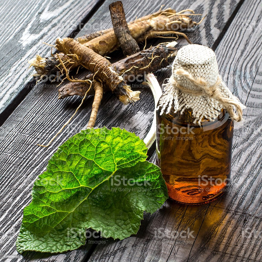 The roots and leaves of burdock, burdock oil in bottles stock photo