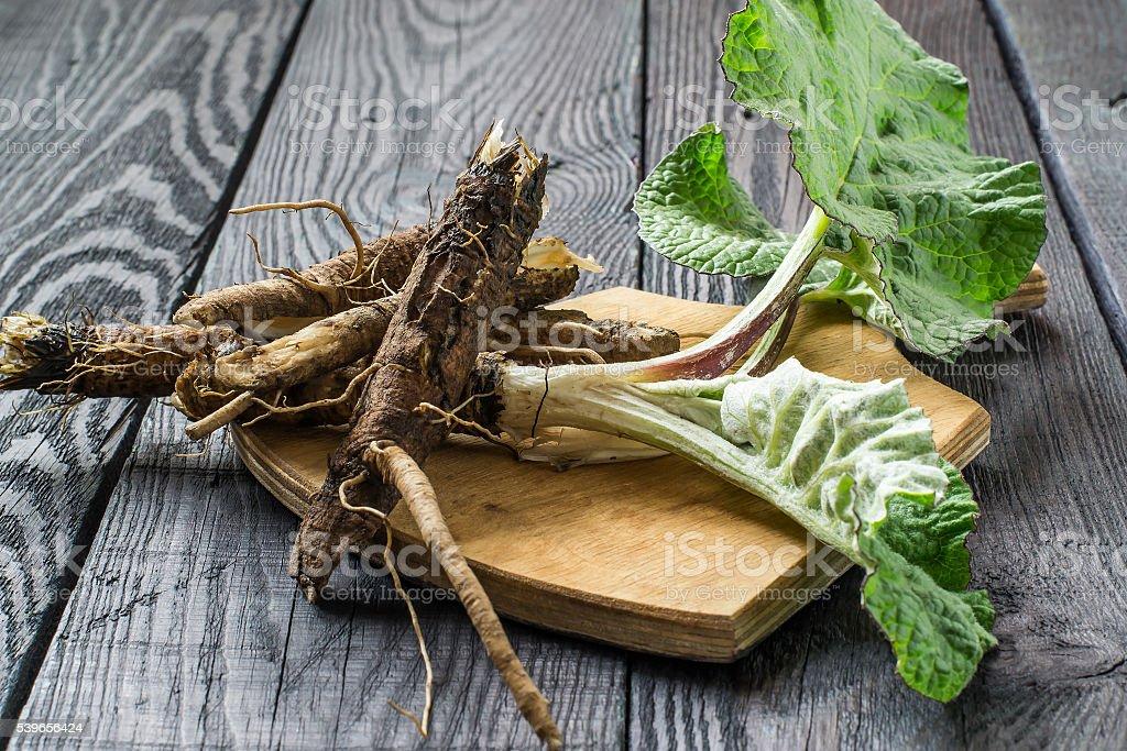 Le radici e foglie di bardana su una bacheca - foto stock