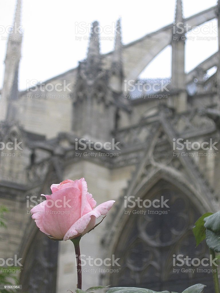 The Rose of Notre Dame royalty-free stock photo