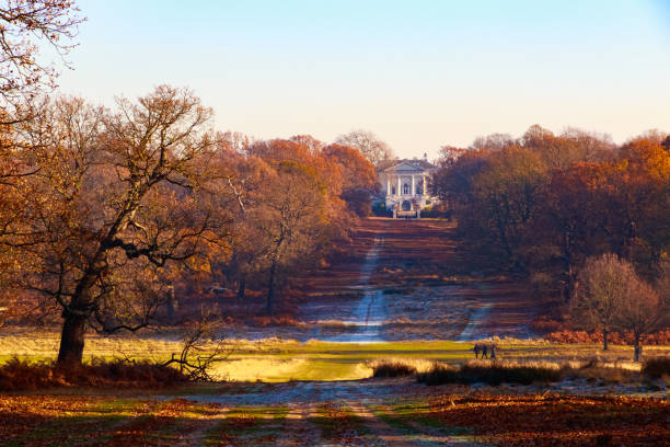 the royal ballet school in richmond park - richmond park stock photos and pictures