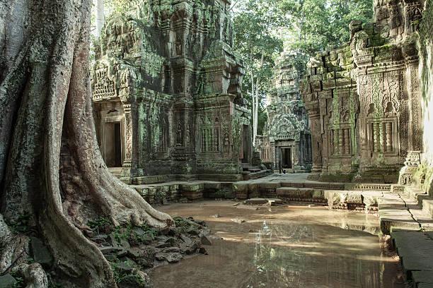 The ruins of Ta Prom Temple, Cambodia. stock photo