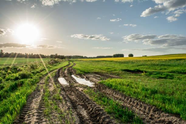estrada rural com uma poça atravessa o campo, grama verde e amarelo estupro, hora por do sol de primavera - estrada em terra batida - fotografias e filmes do acervo