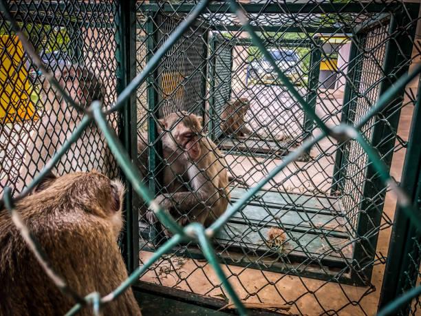 die traurige affen zeigt in den käfig warten auf einem bodycheck. - affentattoos stock-fotos und bilder