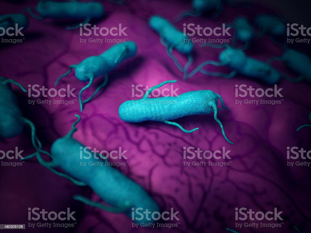 the salmonella stock photo