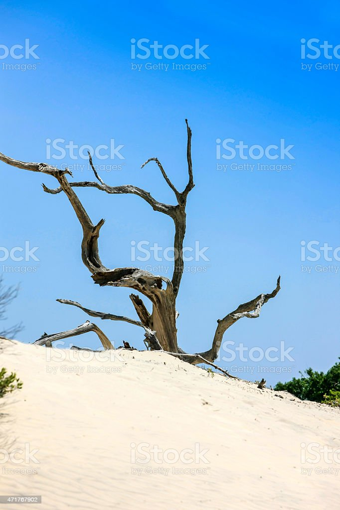 The Sand dunes on Cumberland Island, GA stock photo
