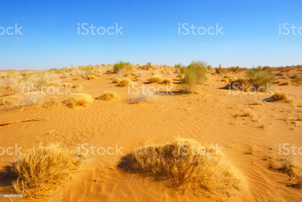 The sandy desert. Natural landscape.Central Asia.Uzbekistan. stock photo